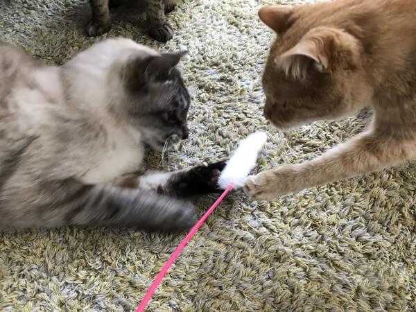 100円ショップの猫用おもちゃ