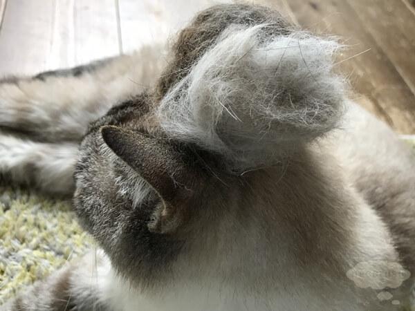 ファーミネーター FURminatorで取れた猫の毛