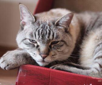 ガリガリウォールで眠る猫