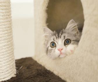 引越し後の猫