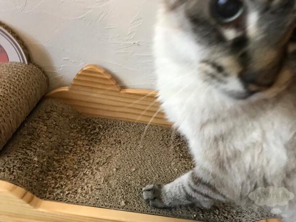 iOCHOW猫用爪とぎで爪を研ぐ猫