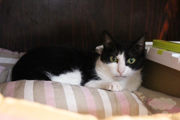 東京の保護猫団体ラブコさん