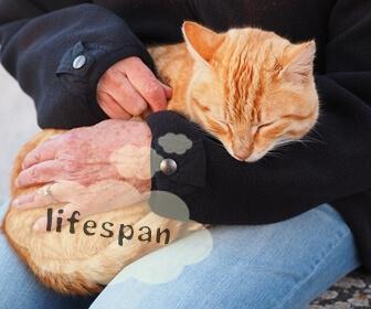 猫の寿命を延ばすために