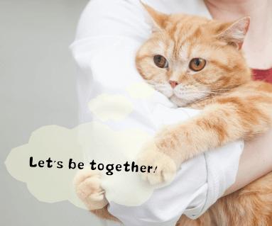 猫の防災・災害対策について真剣に学びたい人におすすめの講座