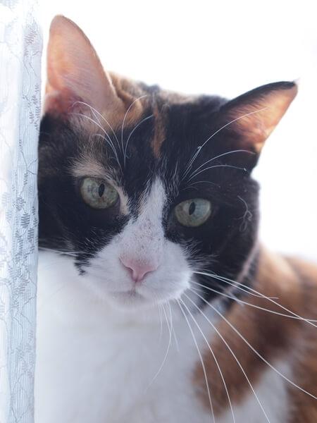 三毛猫の性格