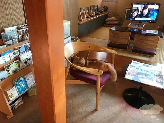 箱根仙石原、猫のいる温泉旅館みたけ、看板猫のレオ君