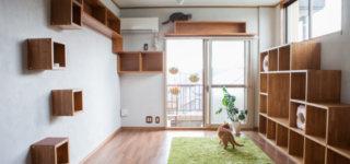 人も猫も住みやすい猫仕様賃貸、サノスケ不動産の梅が丘森ビルの見学レポート!