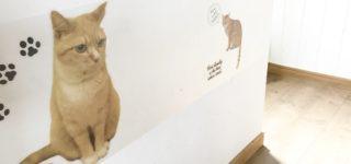 猫の爪とぎ防止シートを貼った壁