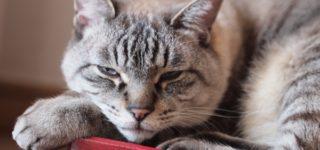 ガリガリウォールスクラッチャー、猫がウーンと伸びて爪とぎできます!
